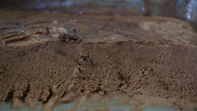 Helado de Nutella